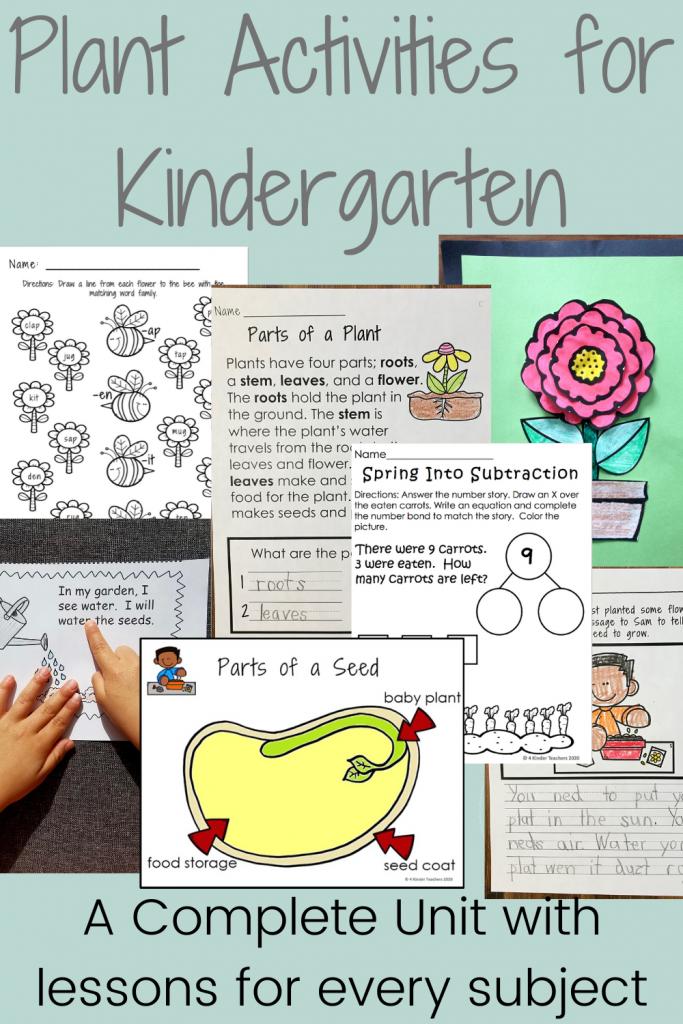 plant-activities-for-kindergarten