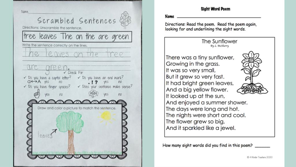 plant-worksheets-for-kindergarten